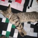 Kočičí škrabadlo