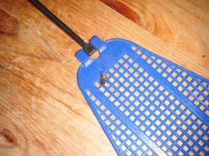 moucha na plácačce