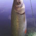 Jak se zbavit zápachu rybiny