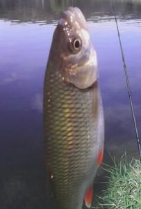 Ryba ulovená