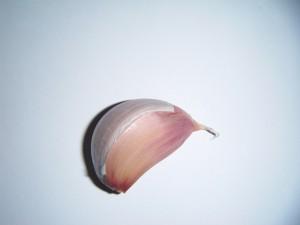 Stroužek česneku vhodný pro sázení